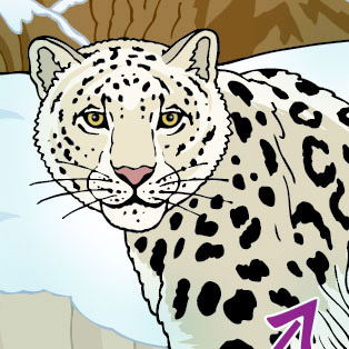 5W Samples - Snow Leopard for Quoti